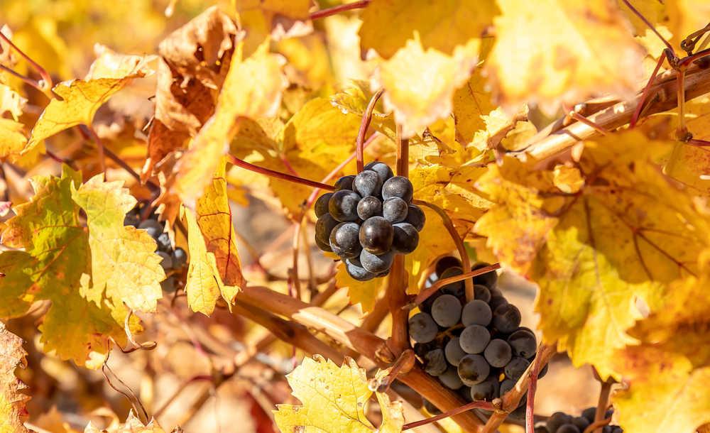 De ruta de vinos por Alicante